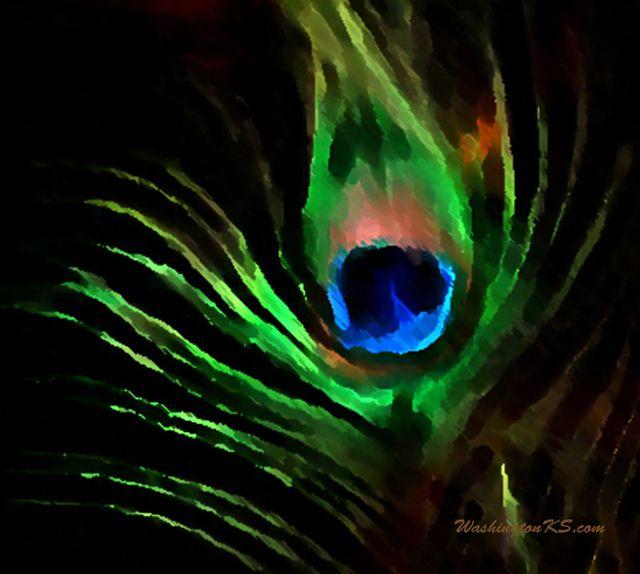 Peacock Feather Desktop Wallpaper Peacock Feather